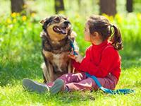 Собаки не кусают абы кого и просто без повода