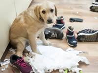 Что означает виноватый взгляд собаки?