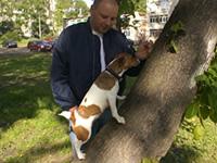 Видео: джек рассел Майло пробует залезть на дерево