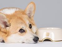 Собаки обладают способностью делиться пищей