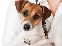 Ключевые ошибки хозяев при выращивании собаки