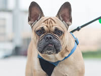 Как научить собаку спокойно ждать перед выходом на прогулку?